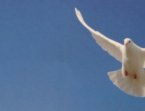 """""""Suche den Frieden und jage ihm nach!"""" (Psalm 34,15) Gedanken zur Jahreslosung"""